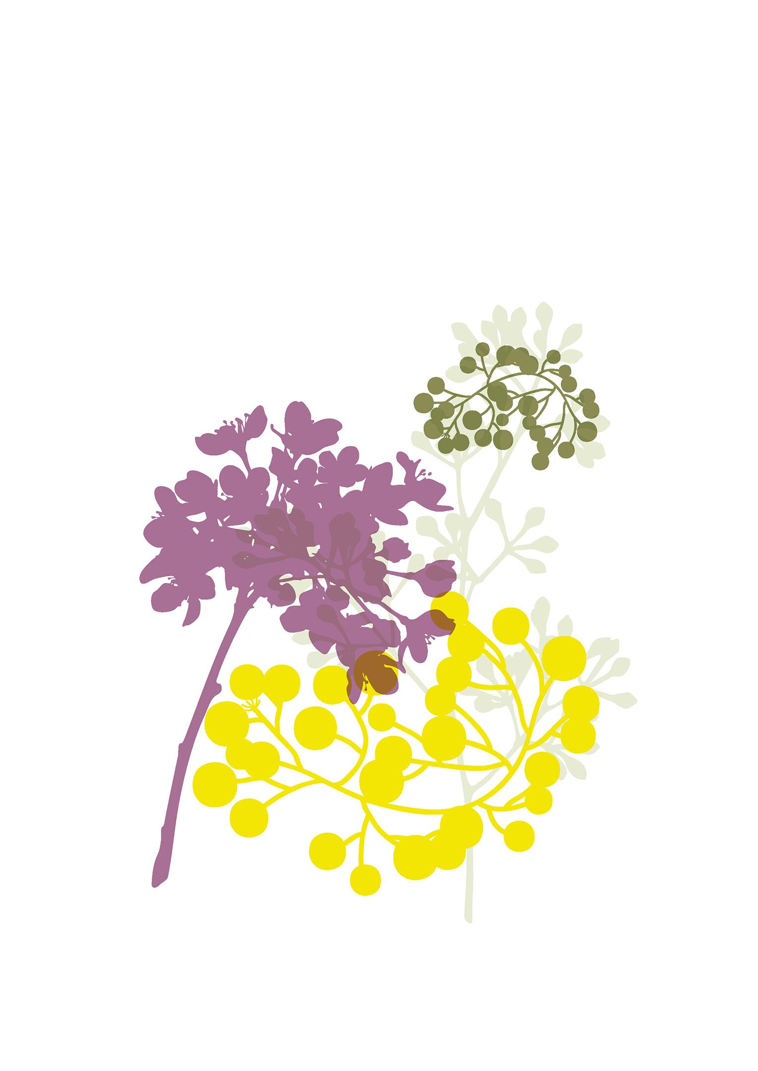 australian-flowers-illustration-02