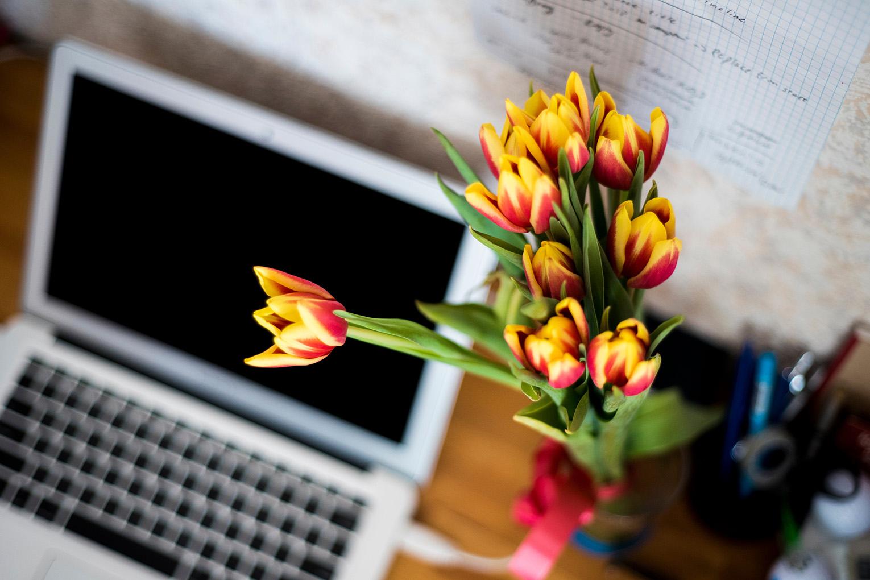 desk-tulips-flowers-1530x1020px