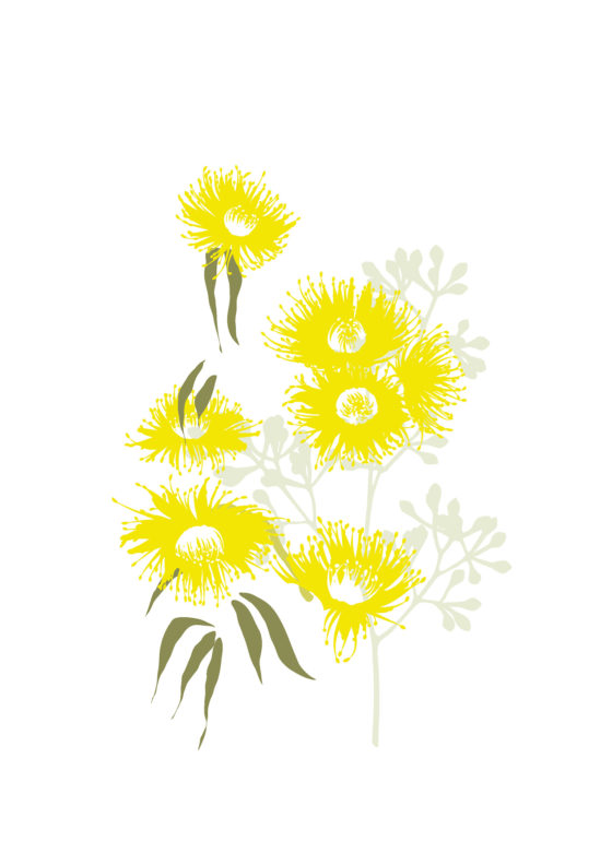 australian-flowers-illustration-01